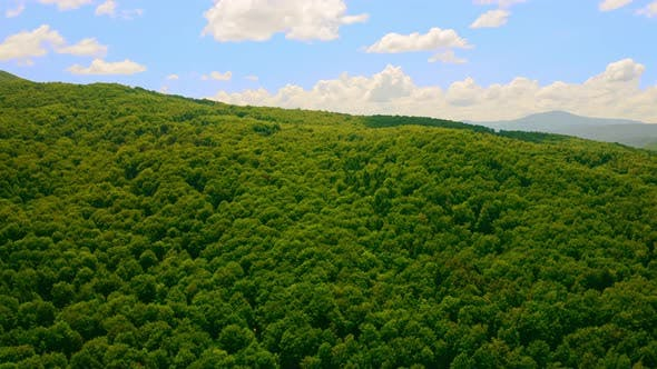 Thumbnail for Aerial View Sidehill Covered Deciduous Trees