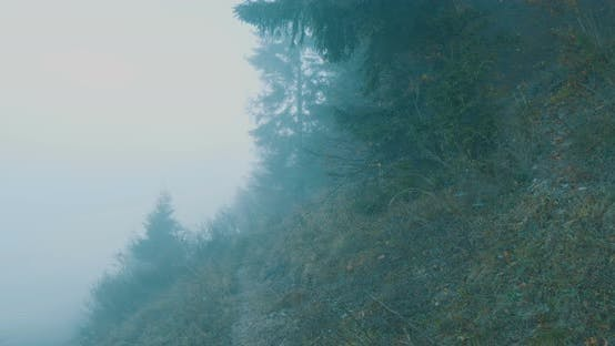 Cover Image for Walking On Foggy Mountain