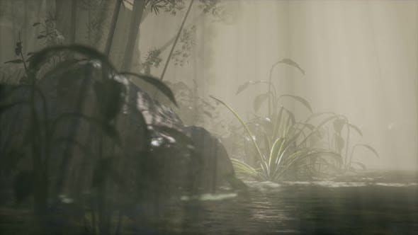 Thumbnail for Sun Shining Through Trees and Fog in a Tropical River
