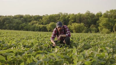 Farmer Carefully Looks on His Crops