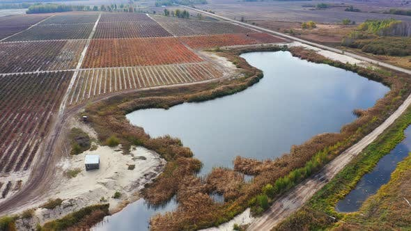 Thumbnail for Flying Over Blueberry Fields with Irrigation Pond. Blueberry Plantation. Aerial Footage