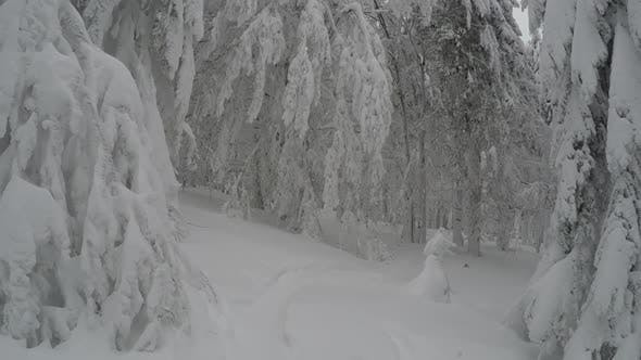 Thumbnail for Spectacular Snowy Mountain Forest