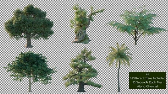 Tree Pack 4K