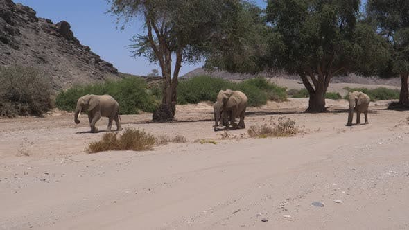 Herd of Elephants walking around