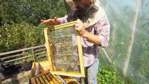 beekeeper holding a framework full of bees