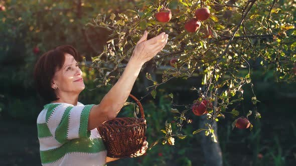 Thumbnail for Woman Pick an Apples in a Basket