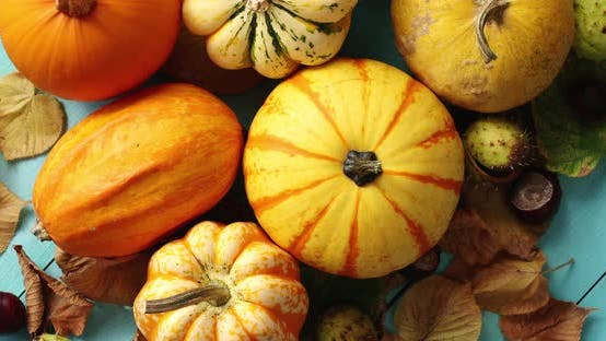 Thumbnail for Pile of Pumpkins Decorated with Leaves and Chestnuts