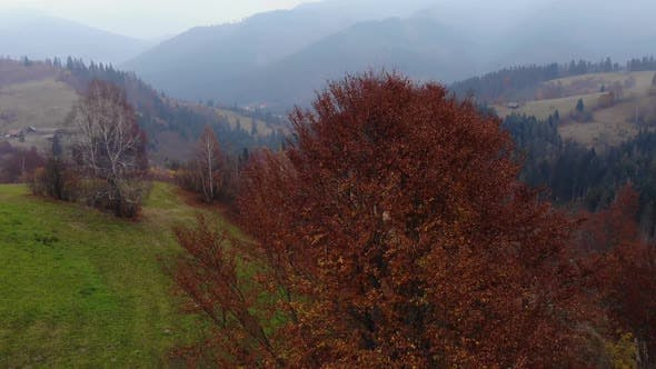 Aerial Drone Footage View: Drone crash to tree in autumn mountain.