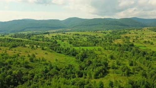 Aerial View on Rural Scene in Summer