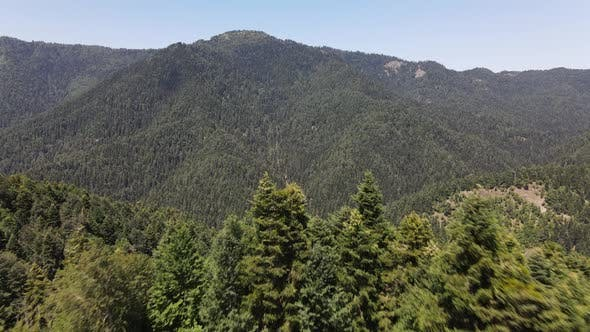 Natural Tress Mountian Forest