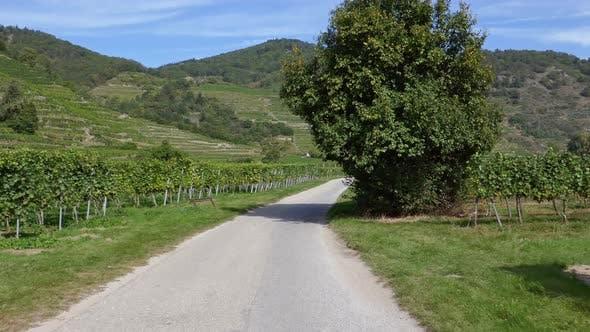 Thumbnail for POV Cycling in Wachau Vineyards, Austria
