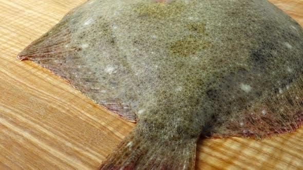 Thumbnail for Fish of Flatfish