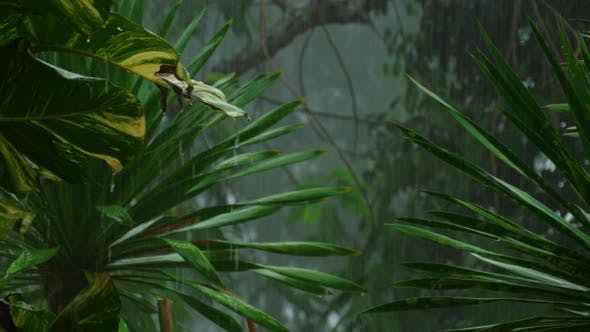 Cover Image for Tropical Downpour Outdoors