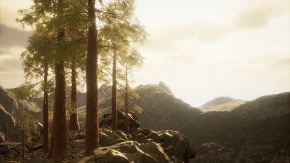 Thumbnail for Cliff with Trees and Light of the Sun