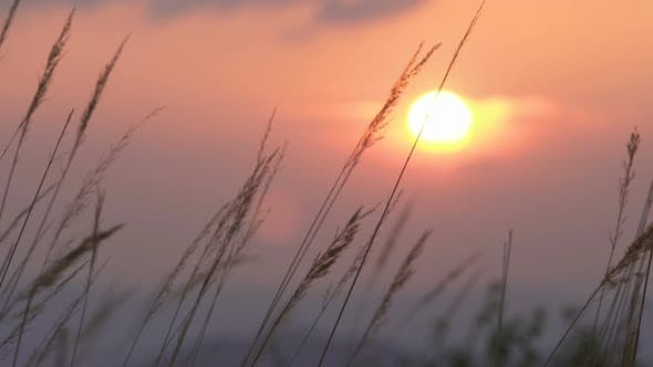 Cover Image for Sunset Grass