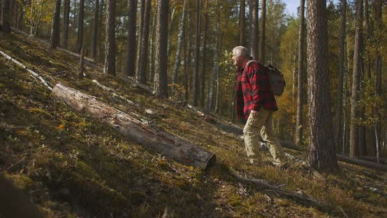 Lost Man Is Walking in Woodland, Tired Hiker Is Looking for a Path, Exploring Landscape, Carrying