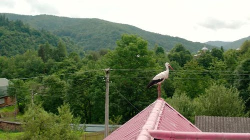 Aerial Drone View Stork in the Roof