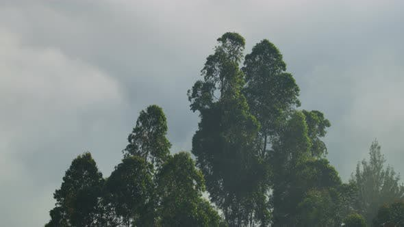 Trees and a cloudy sky