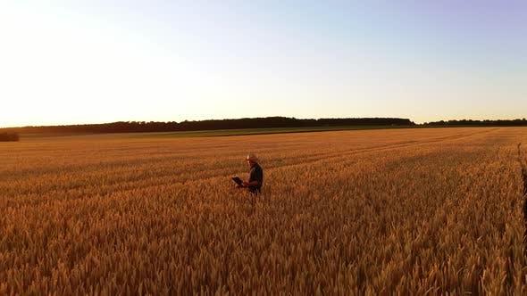Thumbnail for Farmer in farmland at sunset
