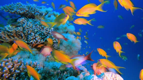 Thumbnail for Colorful Corals and Fishes