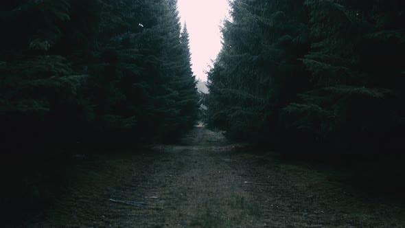 Infocused Pathway