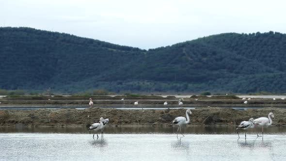 Thumbnail for Eurasian spoonbill searching for food in a lake