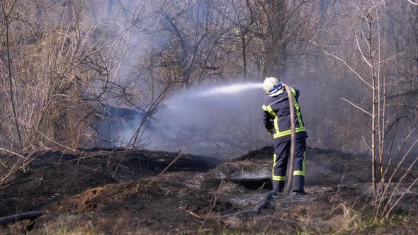Firefighter in Equipment Extinguish Forest Fire with Fire Hose. Wood, Spring Day