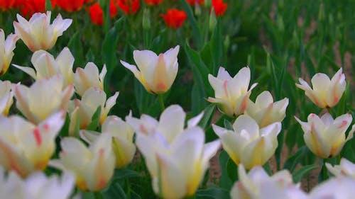Wunderschöne Blumenmesse in Europa