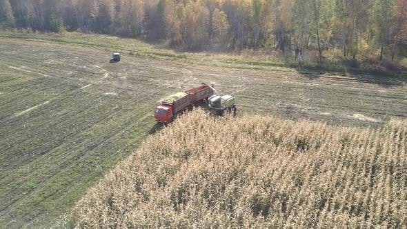 Thumbnail for Upper View Corn Combine with Truck Work at Silage Harvesting