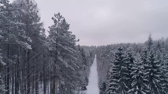 Thumbnail for Luftaufnahme eines schneebedeckten Waldes in Estland