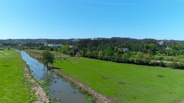 Thumbnail for Drone Over Flowing River In Forest In Countryside