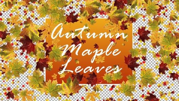 Thumbnail for Autumn Maple Leaves