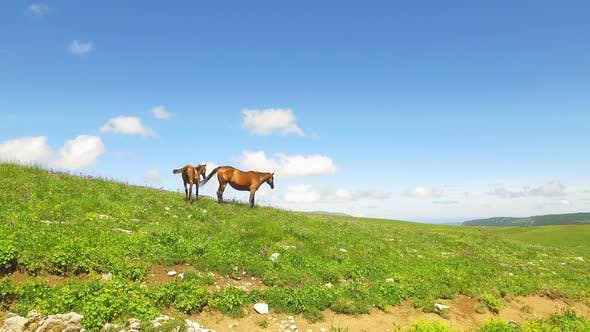 Cover Image for Horse With Foal  In Green Meadows 1