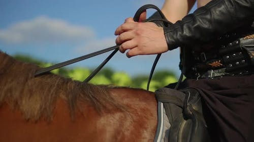 Rider Holds Horse By Reins