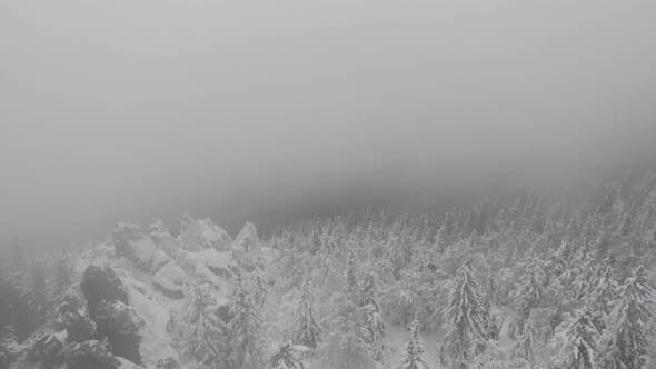 Snowstorm in a Forest Mountain with Frozen Frosty Trees
