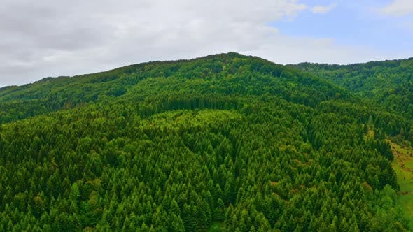 Aerial View on Wood Overcast Day