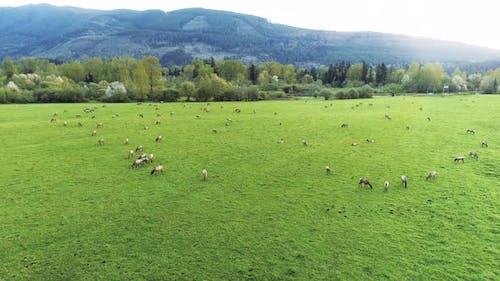 Verträumter Schuss von Elch Herde von Tieren Fütterung auf Vegetation
