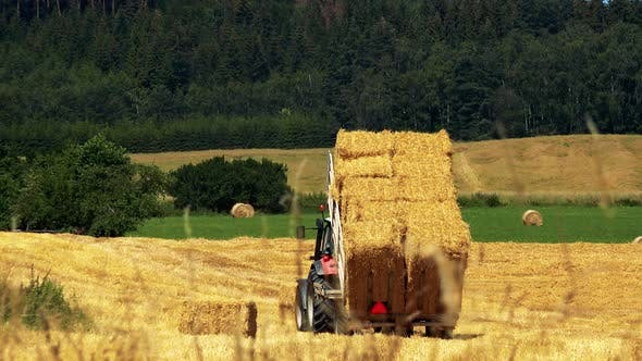 Thumbnail for Farmers Harvest Grain From the Field (Farmer Unloads Haystacks From the Trailer) - Sunny Day