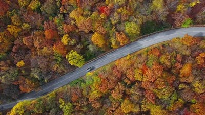 Aerial of Cars Driving Through Sunny Autumn Forest