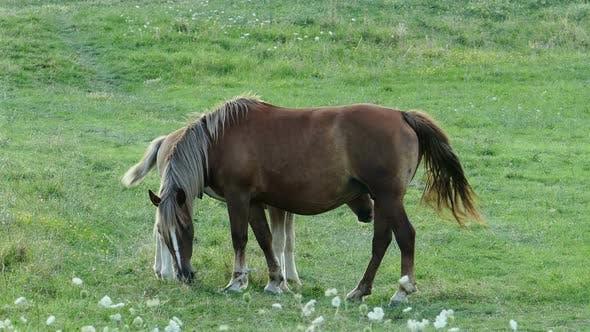 Thumbnail for Family of Horses