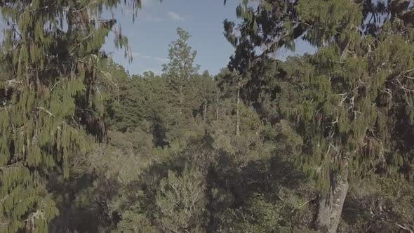 Flying through bush
