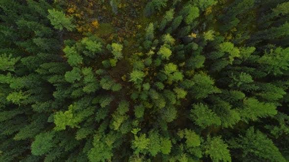 Thumbnail for Amazing and Grand Green Forest View Concept Wildlife and Nature Wide Shot
