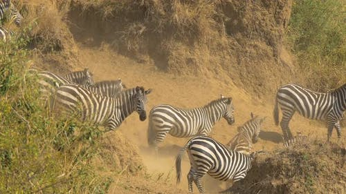 Zebras walking on dusty terrain