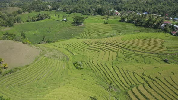 Thumbnail for Aerial drone view of the Cadapdapan Rice Terraces in Bohol, Philippines