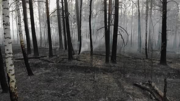 Dark Mysterious Burned Forest Landscape.