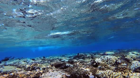 Wellen und Riff