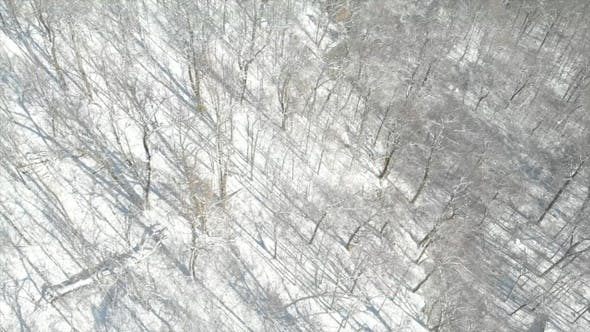 Thumbnail for Aerial of Snow Trees in Mountain Wilderness