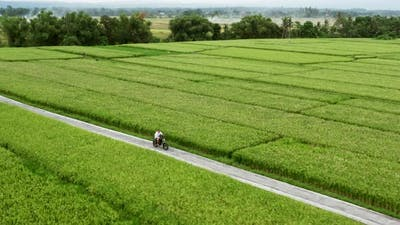 A Young Man Riding a Chopper on a Countryside Road