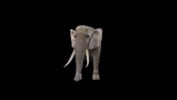 Elephant Look