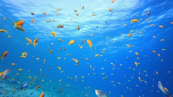Cover Image for Underwater Fish Orange